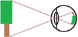Augen (Lichtverlauf, Sehfehler, Linse etc.)